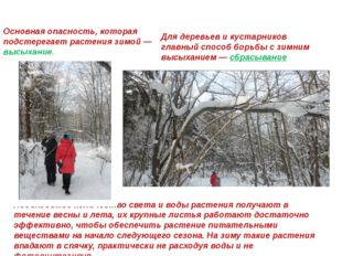 Приспособление к зиме Основная опасность, которая подстерегает растения зимой