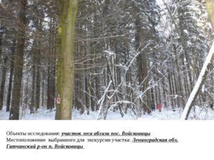 Объекты исследования: участок леса вблизи пос. Войсковицы Местоположение выбр