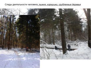 Следы деятельности человека: лыжня, кормушки, срубленные деревья