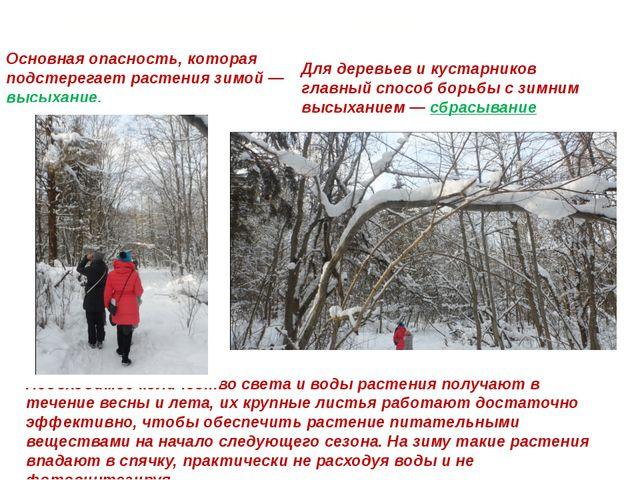 Приспособление к зиме Основная опасность, которая подстерегает растения зимой...