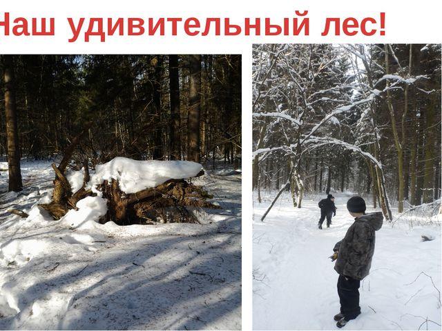 Наш удивительный лес!