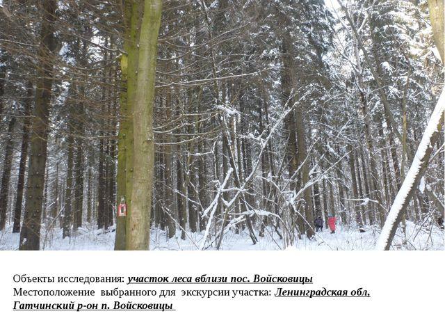Объекты исследования: участок леса вблизи пос. Войсковицы Местоположение выбр...