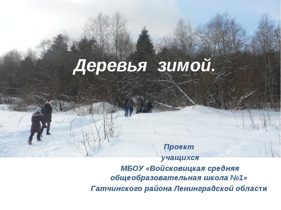 Деревья зимой. Проект учащихся МБОУ «Войсковицкая средняя общеобразовательная...