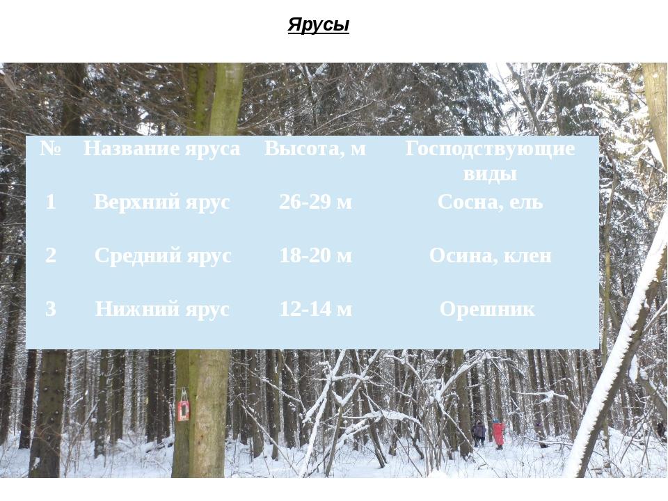 Ярусы № Название яруса Высота, м Господствующие виды 1 Верхний ярус 26-29 м С...