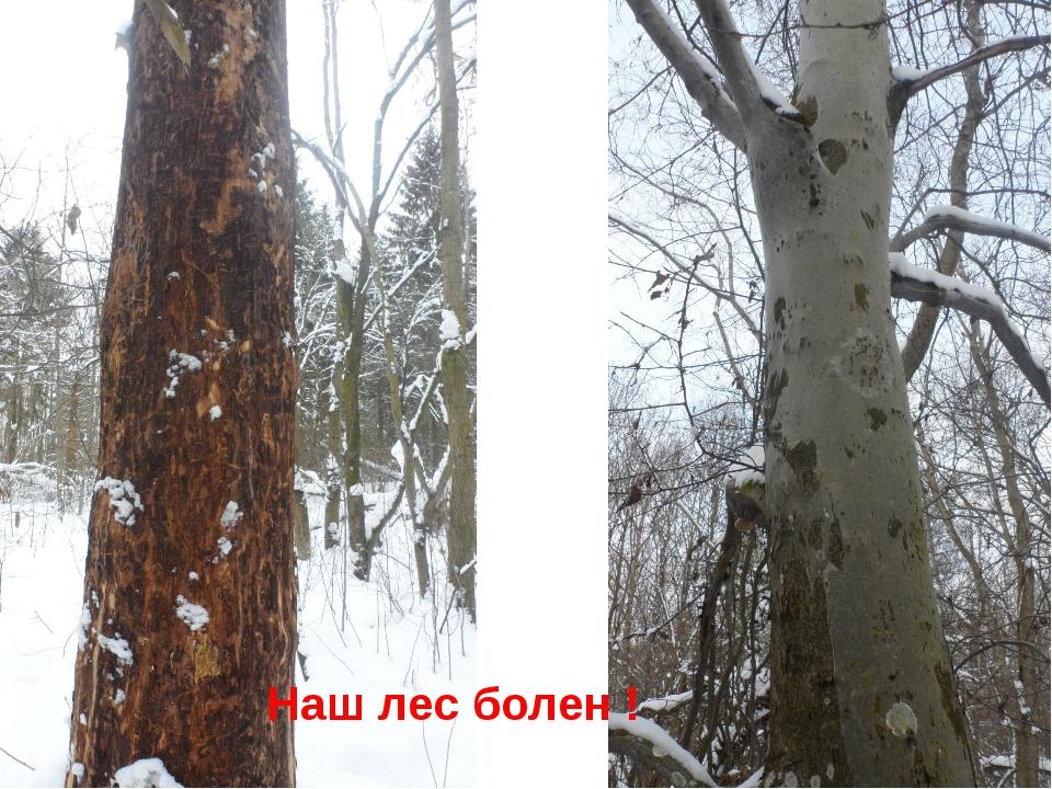 Наш лес болен !