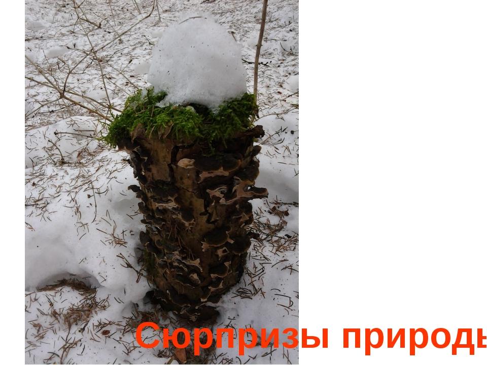 Сюрпризы природы