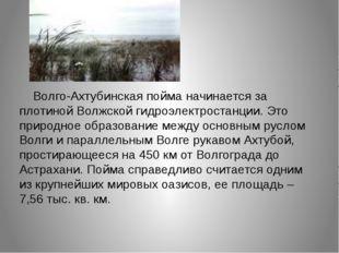 Волго-Ахтубинская пойма начинается за плотиной Волжской гидроэлектростанции.