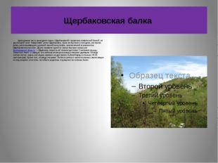 Щербаковская балка Центральная часть природного парка «Щербаковский» прорезан
