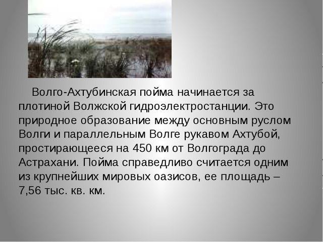 Волго-Ахтубинская пойма начинается за плотиной Волжской гидроэлектростанции....