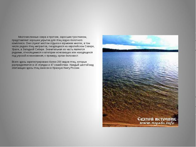 Многочисленные озера и протоки, заросшие тростником, представляют хорошее ук...