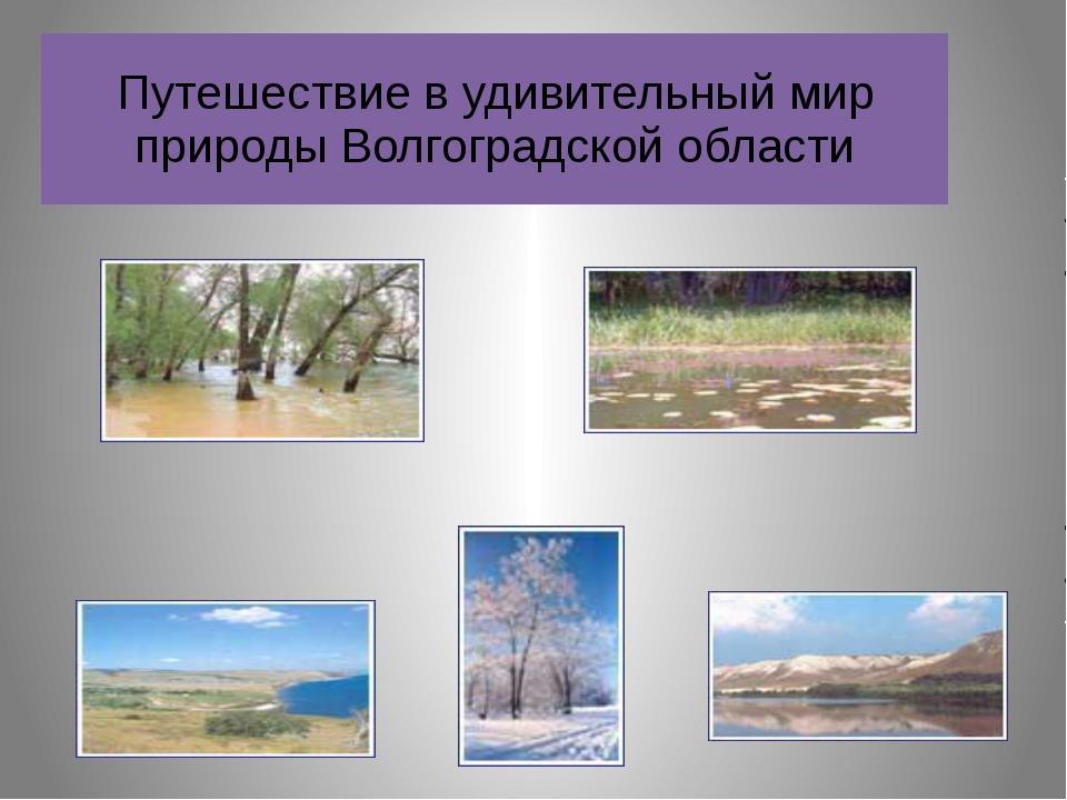 Путешествие в удивительный мир природы Волгоградской области