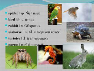 spider|ˈspʌɪdə|паук bird|bɜːd| птица rabbit|ˈrabɪt|кролик seahorse|ˈsi