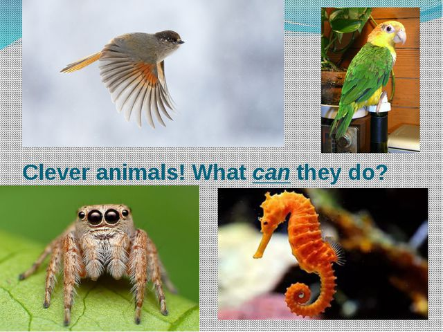 Clever animals! What can they do?