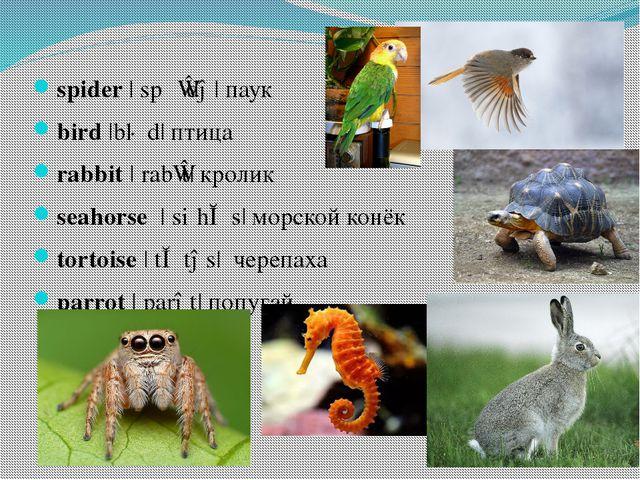 spider|ˈspʌɪdə|паук bird|bɜːd| птица rabbit|ˈrabɪt|кролик seahorse|ˈsi...