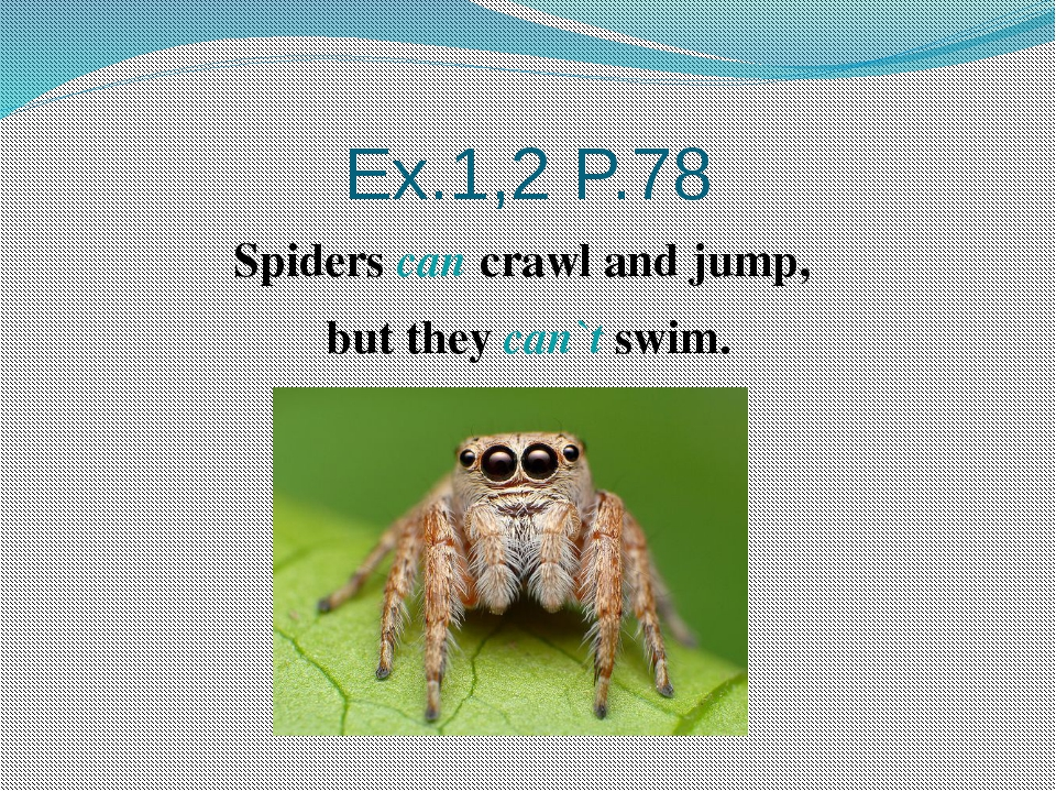 Ex.1,2 P.78 Spiders can crawl and jump, but they can`t swim.