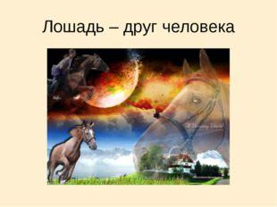 Лошадь – друг человека