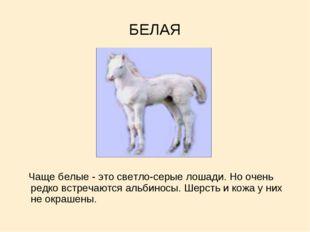 БЕЛАЯ Чаще белые - это светло-серые лошади. Но очень редко встречаются альбин