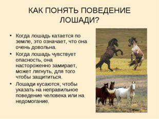 КАК ПОНЯТЬ ПОВЕДЕНИЕ ЛОШАДИ? Когда лошадь катается по земле, это означает, чт