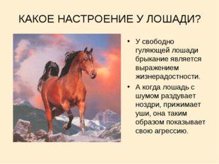 КАКОЕ НАСТРОЕНИЕ У ЛОШАДИ? У свободно гуляющей лошади брыкание является выраж