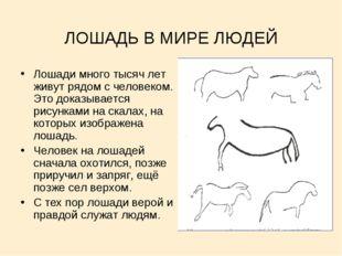 ЛОШАДЬ В МИРЕ ЛЮДЕЙ Лошади много тысяч лет живут рядом с человеком. Это доказ