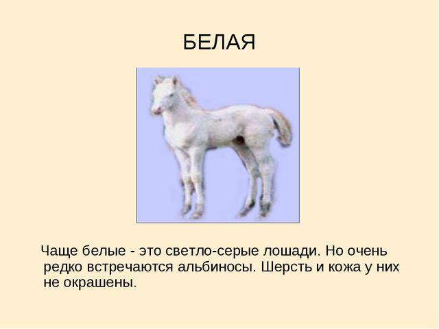 БЕЛАЯ Чаще белые - это светло-серые лошади. Но очень редко встречаются альбин...