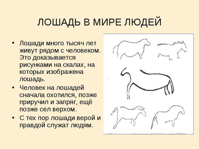 ЛОШАДЬ В МИРЕ ЛЮДЕЙ Лошади много тысяч лет живут рядом с человеком. Это доказ...