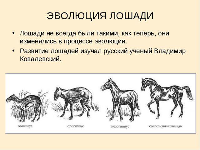 ЭВОЛЮЦИЯ ЛОШАДИ Лошади не всегда были такими, как теперь, они изменялись в пр...