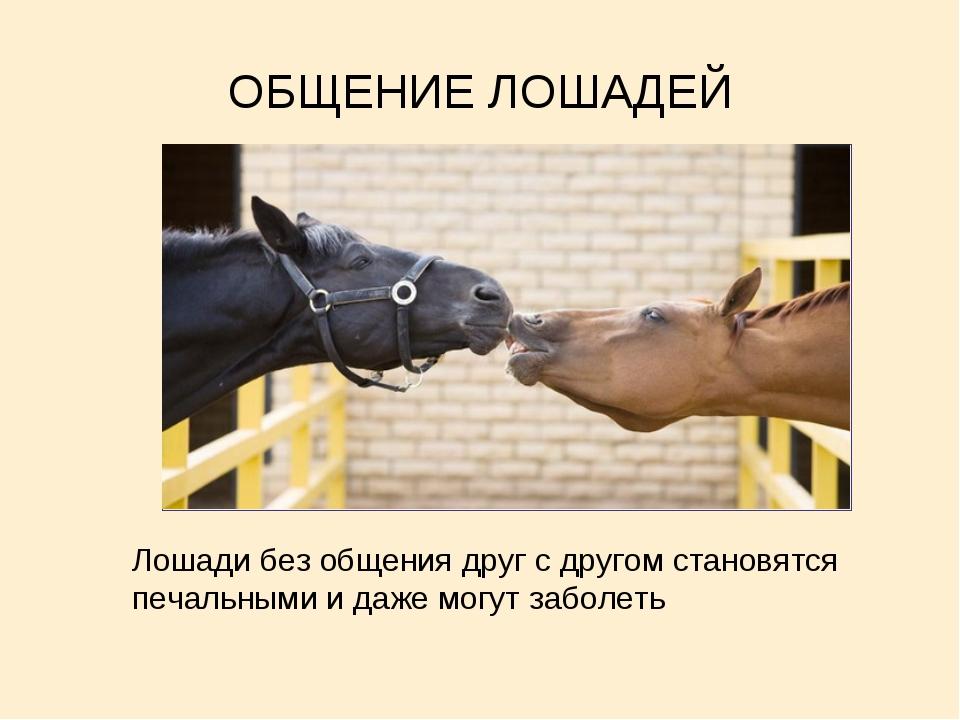 ОБЩЕНИЕ ЛОШАДЕЙ Лошади без общения друг с другом становятся печальными и даже...