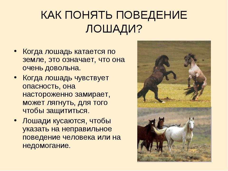 КАК ПОНЯТЬ ПОВЕДЕНИЕ ЛОШАДИ? Когда лошадь катается по земле, это означает, чт...