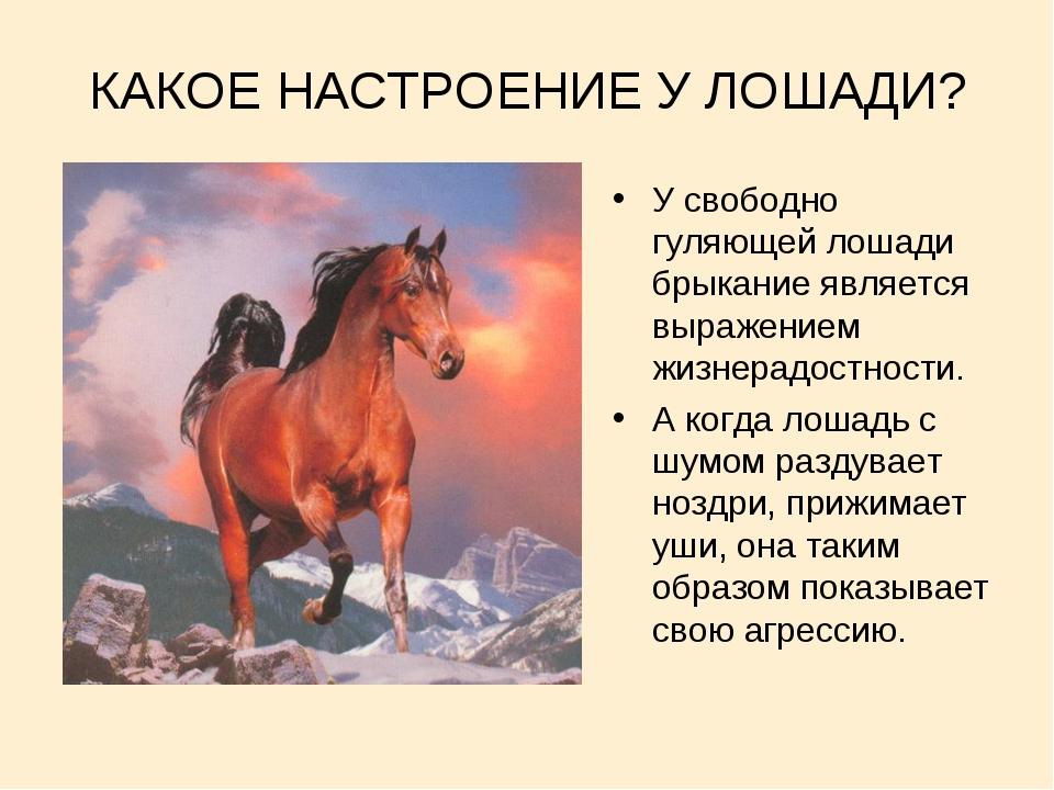 КАКОЕ НАСТРОЕНИЕ У ЛОШАДИ? У свободно гуляющей лошади брыкание является выраж...
