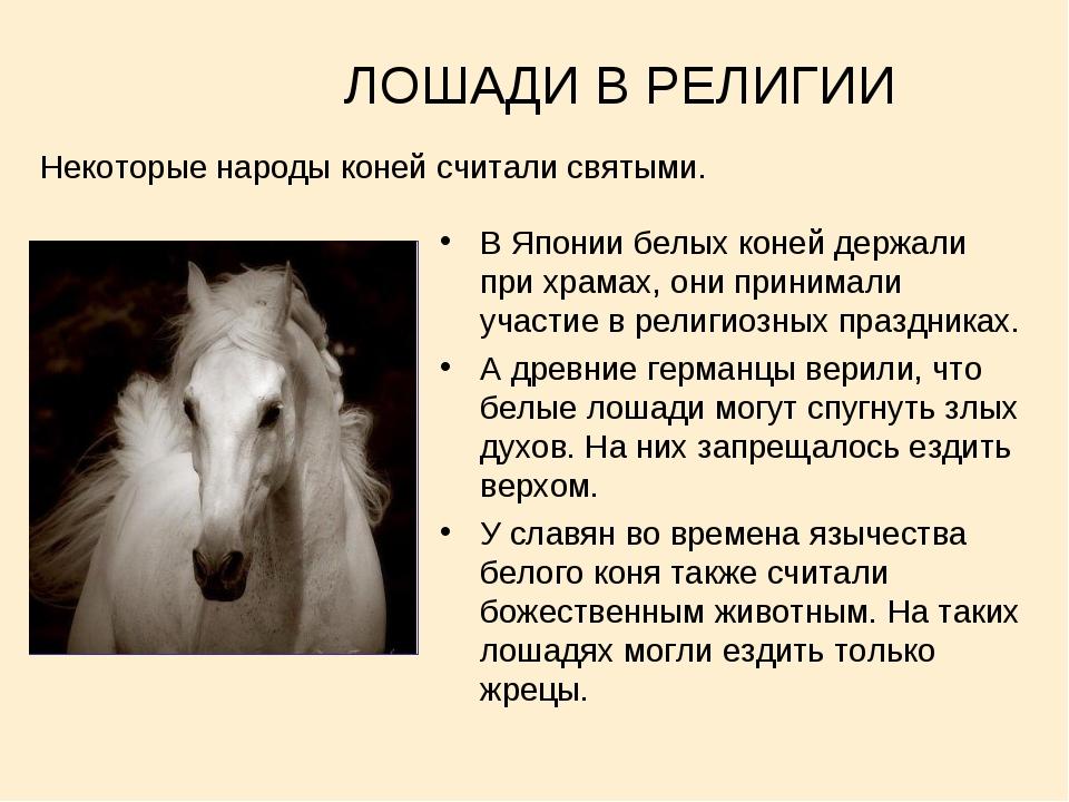 ЛОШАДИ В РЕЛИГИИ В Японии белых коней держали при храмах, они принимали учас...