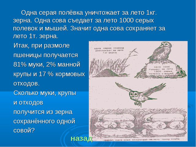 Одна серая полёвка уничтожает за лето 1кг. зерна. Одна сова съедает за лето...