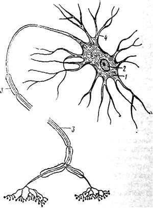 http://biologiya.net/wp-content/uploads/2010/10/pict53.jpg