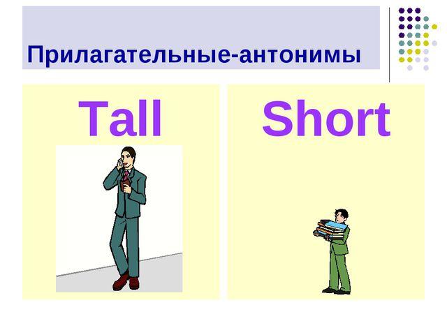 Прилагательные-антонимы Tall Short