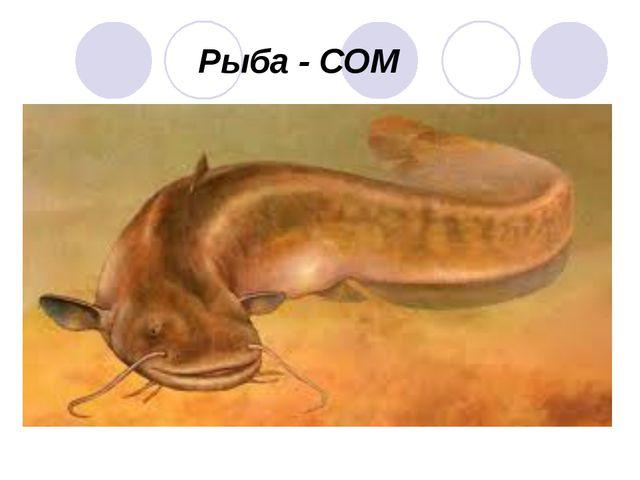 Рыба - СОМ