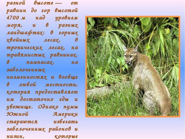 Пумы встречаются на разной высоте— от равнин до гор высотой 4700м над уровн...