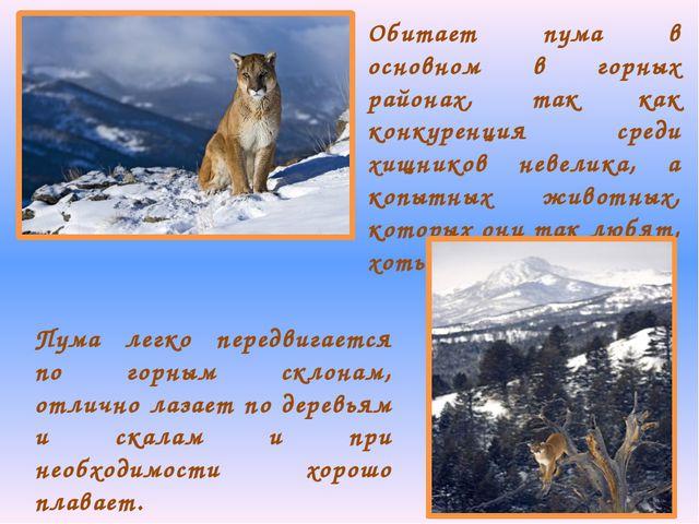 Обитает пума в основном в горных районах, так как конкуренция среди хищников...