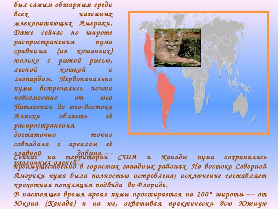 Исторически ареал пумы был самым обширным среди всех наземных млекопитающих А...