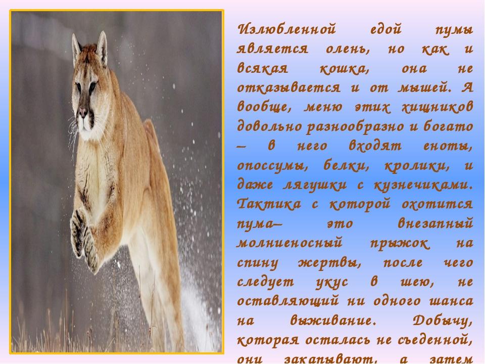 Излюбленной едой пумы является олень, но как и всякая кошка, она не отказывае...