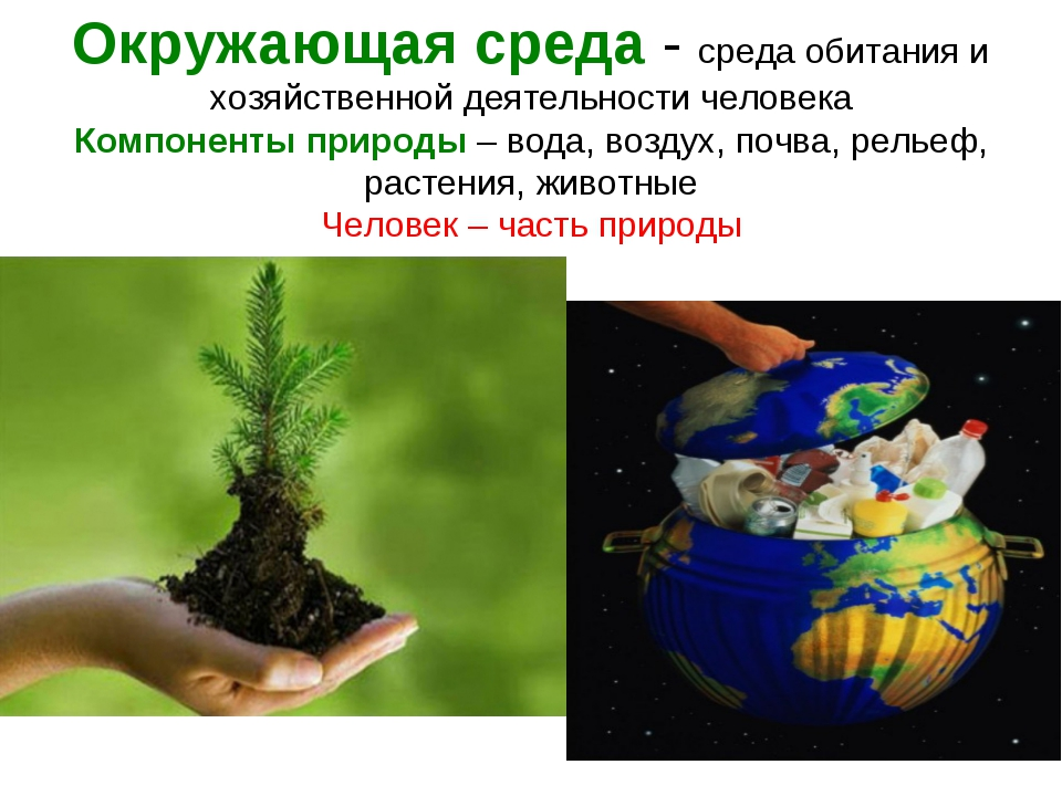 Окружающая среда - среда обитания и хозяйственной деятельности человека Компо...