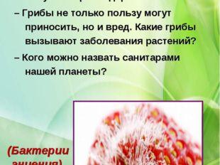 Отвечаем на вопросы – Какую пользу друг от друга получают гриб и дерево? – Гр