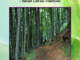 «В лесу есть все, что нужно для человека», - писал Сетон-Томпсон