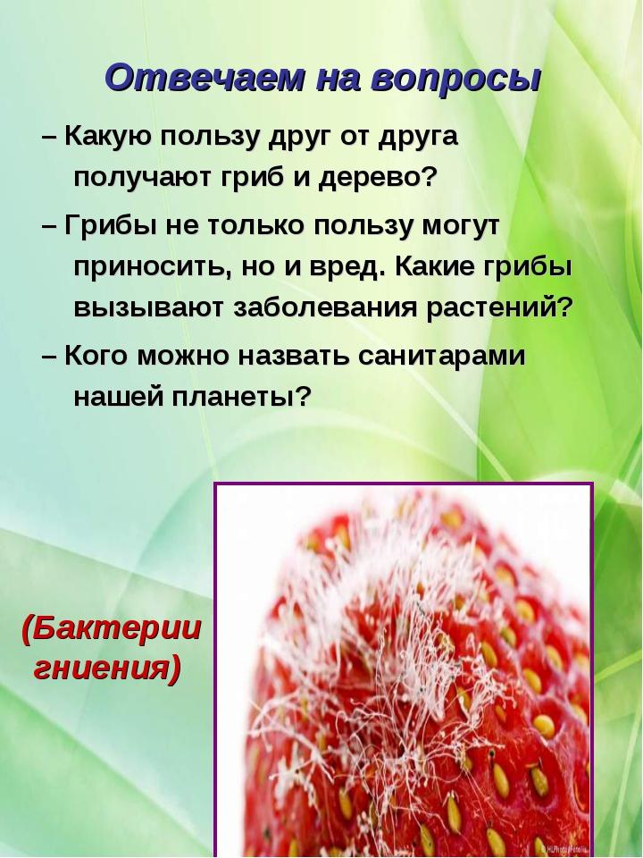 Отвечаем на вопросы – Какую пользу друг от друга получают гриб и дерево? – Гр...
