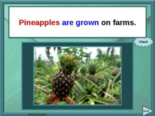 next They grow pineapples on farms. Check Pineapples are grown on farms. com