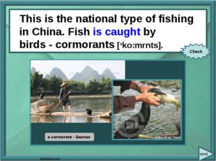 This is the national type of fishing in China. Fish (catch) by birds -cormor