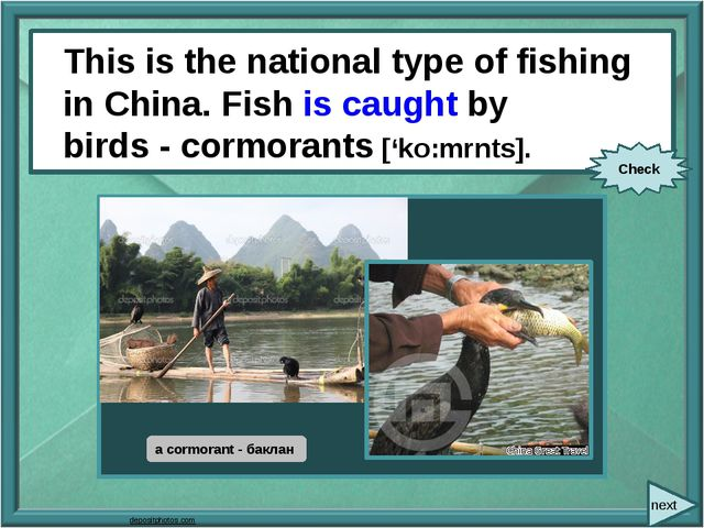 This is the national type of fishing in China. Fish (catch) by birds -cormor...