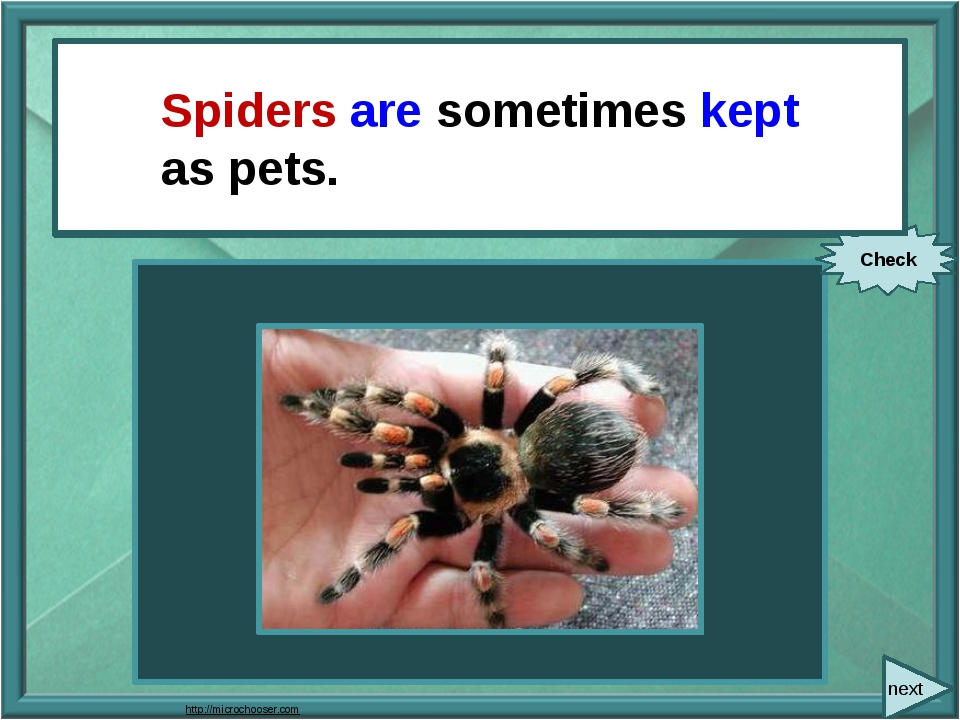 next People sometimes keep spiders as pets. Check Spiders are sometimes kept...