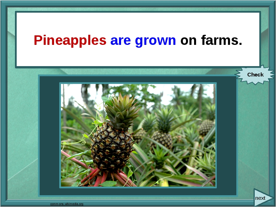 next They grow pineapples on farms. Check Pineapples are grown on farms. com...