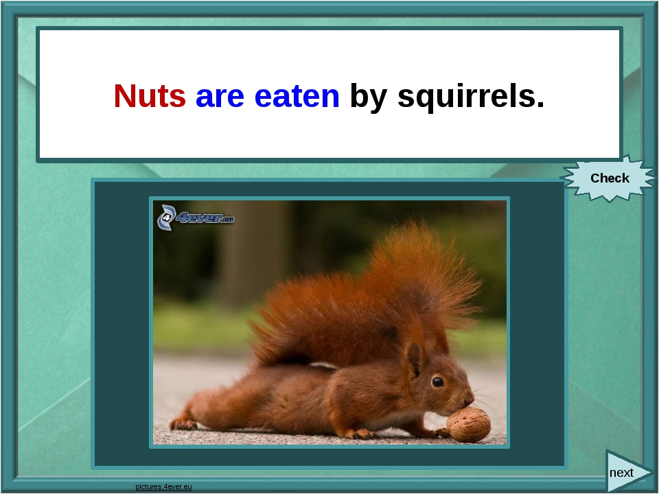 next Squirrels eat nuts. Check Nuts are eaten by squirrels. pictures.4ever.eu