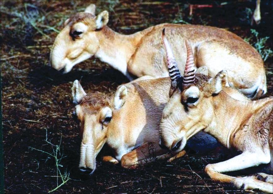 Животные южной америки дикая природа